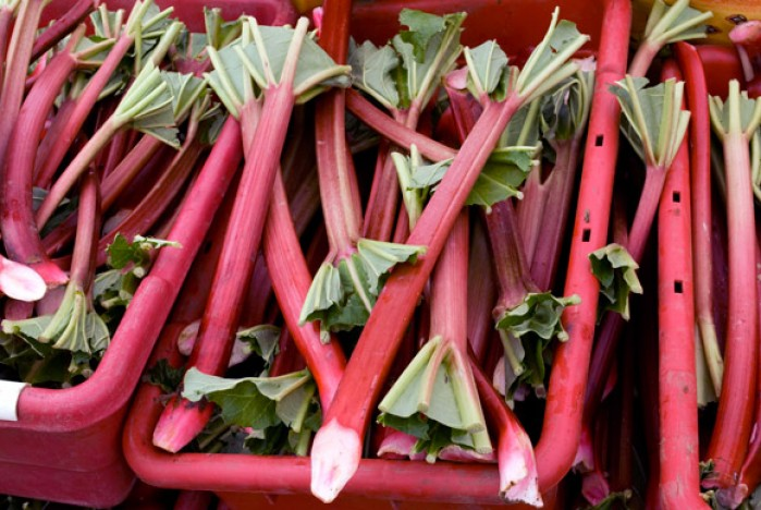 Boxes of Rhubarb at Portland Farmers Market
