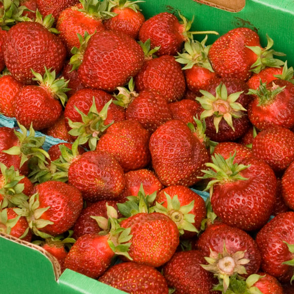 Fresh Strawberry Roundup | LunaCafe