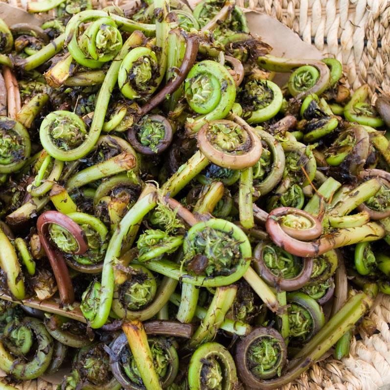 Fiddlehead Ferns at University District Farmers Market in April