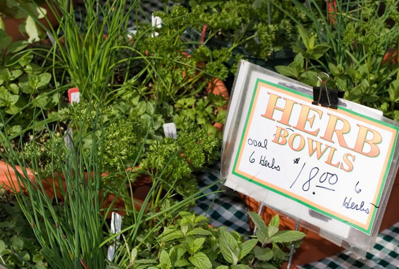Fresh Herb Bowl