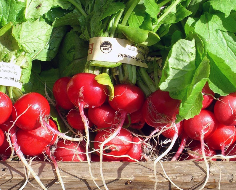 Radishes at University Farmers Market in April