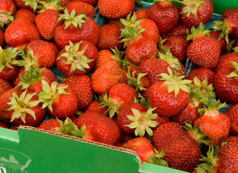 Hood Early Season Oregon Strawberries