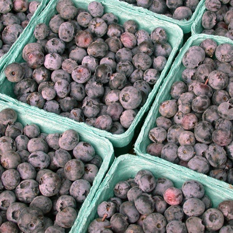 Baskets of Northwest Blueberries