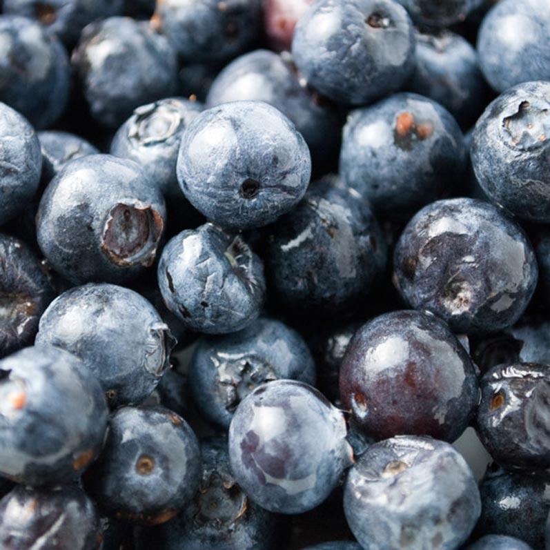 Northwest Blueberries Close Up