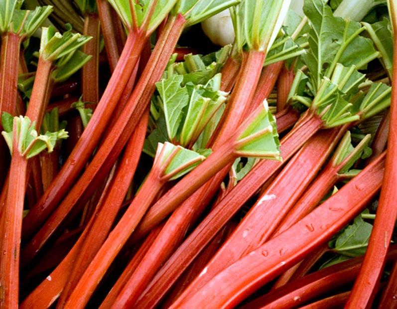 Rhubarb at Portland Farmers Market