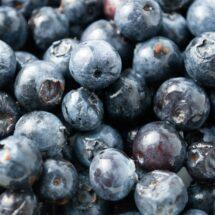 Fresh Blueberry Primer |LunaCafe
