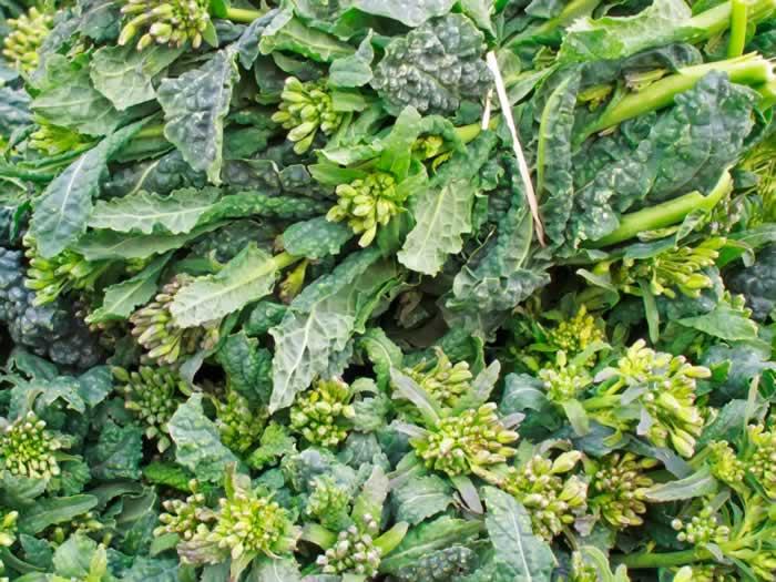 Northwest Fresh: Portland Farmers Market Early Spring 2012