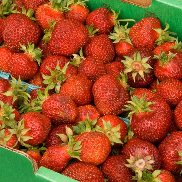 Portland Farmers Market Hood Strawberries