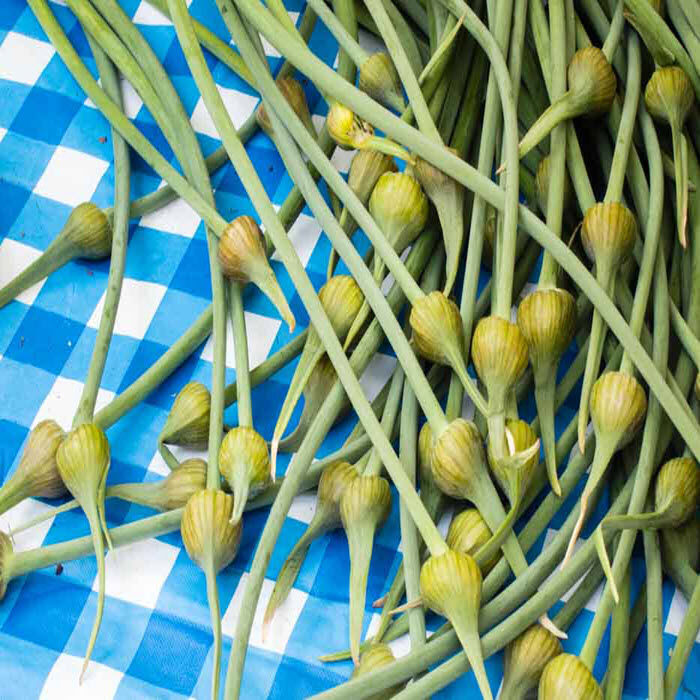 Fresh Primer: Green Garlic & Garlic Scapes