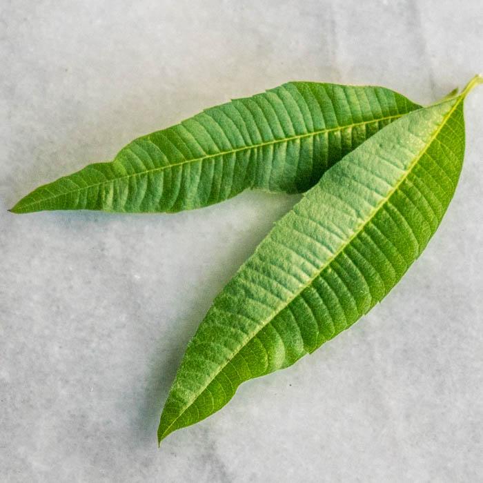 Sprightly Lemon Verbena Syrup & Limeade | LunaCafe